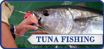Cuda 2, South Africa Fishing Charters, Hermanus Tuna Fishing